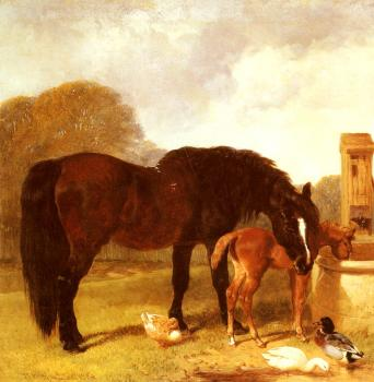Horse and Foal watering at a trough